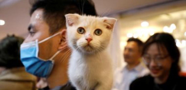 وسط انتشار كورونا.. أي الحيوانات الأليفة تنشر العدوى في منزلك؟