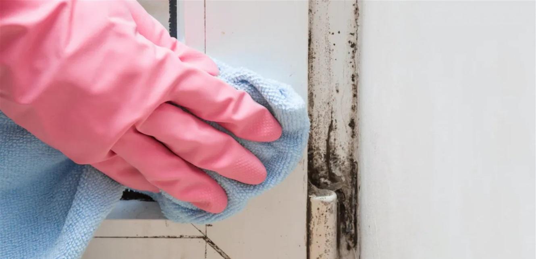 عفن الجدران أخطر مما تتصورون… يسبب هذه الأمراض
