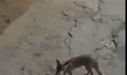خوف في الجنوب..حيوان مفترس ينقض على طفلين في صديقين (فيديو)