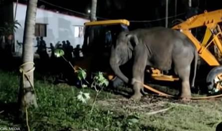 عملية استمرت 12 ساعة.. إنقاذ فيل سقط في
